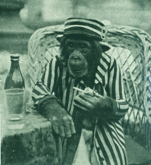 Unfortunately, The Educated Chimpanzee is a lost film but I imagine its pipe smoking scene would have looked similar to this postcard photo.