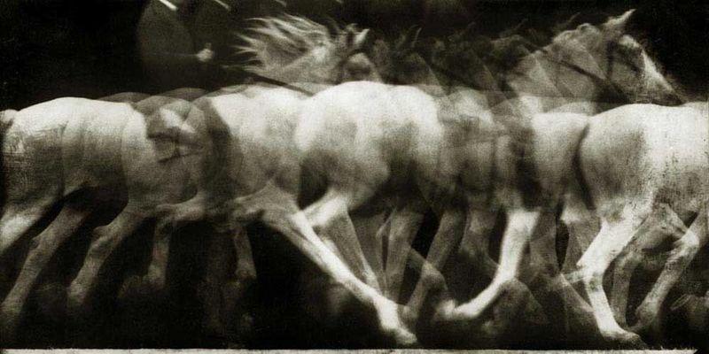 Marey (1886) Cheval Blanc